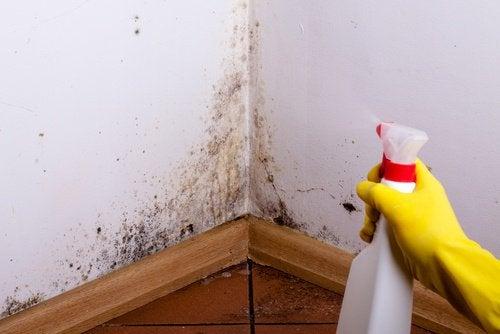 اكتشف كيفية التخلص من البقع الرطبة والعفن من منزلك!