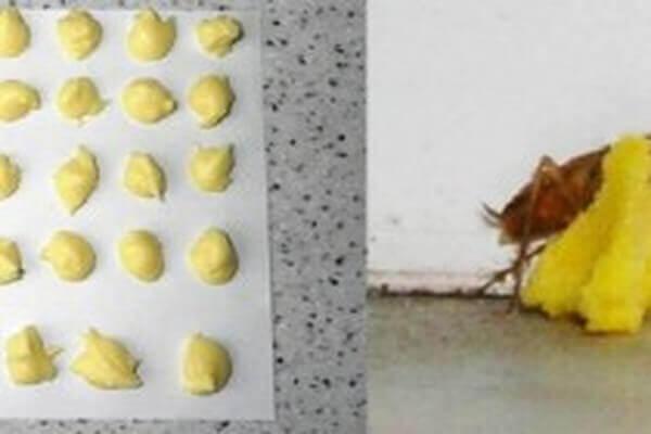 حمض البوريك والبيض للقضاء على الصراصير