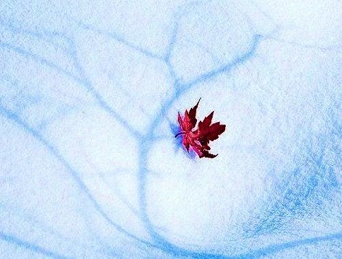 ورقة شجر على الجليد