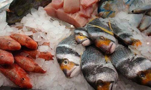 الزئبق و الأسماك
