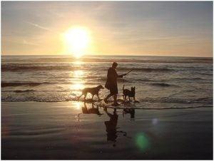 رجل يتنزع على شاطئ البحر مع كلبيه
