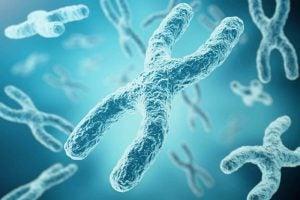 مجموعة من الكروموزومات والمسئولة عن الذكاء