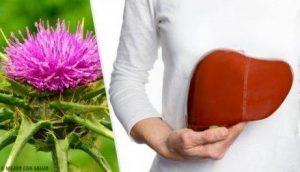 عشبة شوك اللبن لعلاج الكبد الدهني