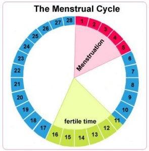 الدورة الشهرية