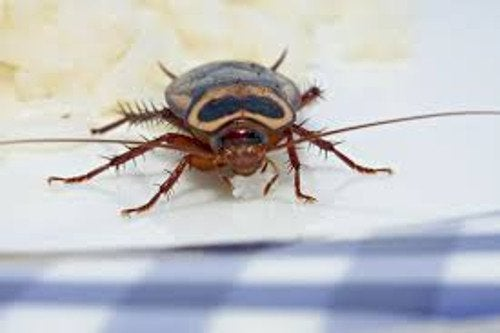 الحشرات الطائرة والزاحفة – حيل تساعدك على  إبعاد الحشرات عن منزلك
