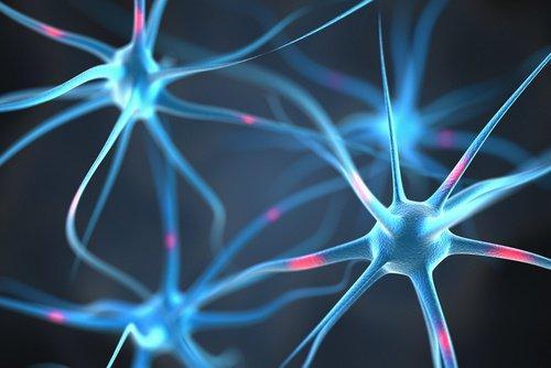 الموصلات العصبية