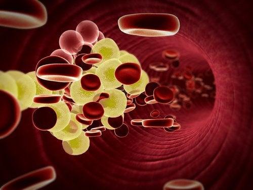 خلايا الدم و بذور الأفوكادو