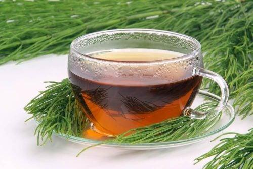 شاي ذنب الخيل