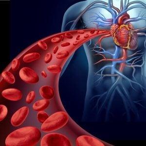 الدورة الدموية بجسم الإنسان