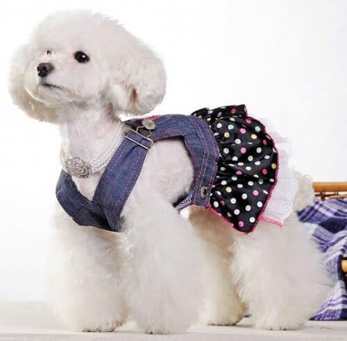 ملابس صغيرة للحيوانات الأليفة مصنوعة من الجينز