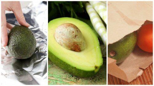 فاكهة الأفوكادو – 5 طرق لجعل ثمار الأفوكادو تنضج خلال دقائق معدودة