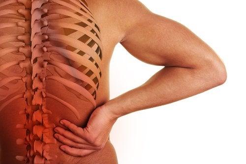 علاقة العمود الفقري بأعضاء الجسم – الروابط المثيرة للاهتمام بين الفقرات وأعضاء الجسم