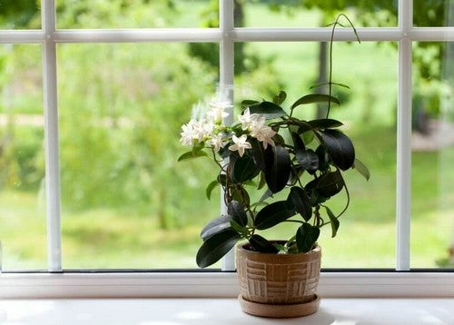 نباتات على شباك غرفة النوم