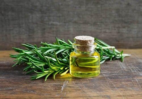 نبات إكليل الجبل – اكتشف الاستخدامات والفوائد المدهشة لإكليل الجبل
