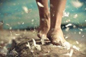 أقدام وريش