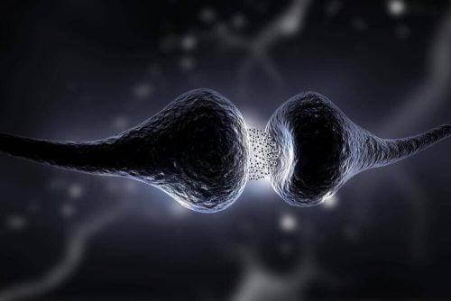 حمية السيروتونين- ما هي هذه الحمية وما هي أبرز فوائدها؟