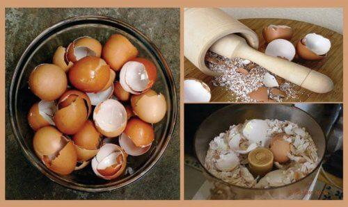 قشور البيض - اكتشف 6 علاجات طبيعية مثيرة للاهتمام باستخدام قشور البيض