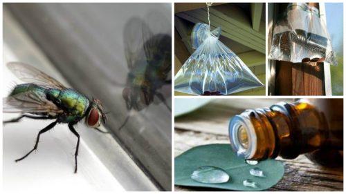 التخلص من الذباب - أفضل 6 حلول منزلية للقضاء على الذباب تمامًا