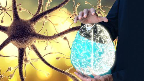 العصب الحائر – كيف تقوم بتفعيل العصب الرئوي المعدي لصحة أفضل