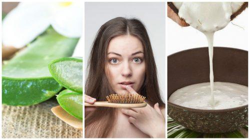 تساقط الشعر المفرط – كافح تساقط الشعر بهذه العلاجات المنزلية الستة