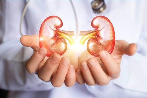 تطهير الكليتين - حمية رائعة لتطهير الجسم والكليتين من السموم