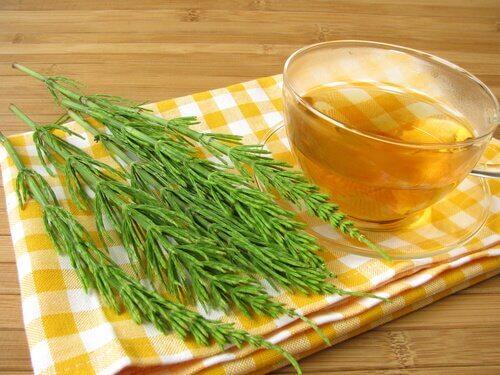 فنجان من شاي عشبة ذيل الحصان