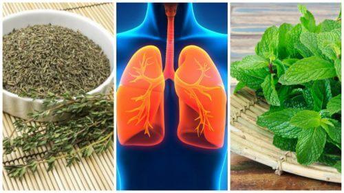 صحة الرئتين – 8 أعشاب يمكنك من خلالها تحسين صحة رئتيك