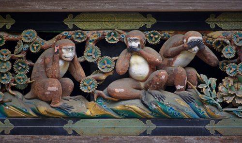 قصة القردة الحكيمة والدروس المذهلة التي نستطيع تعلمها منها