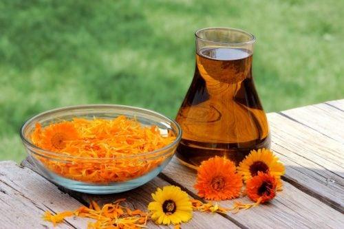 زهرة نبات الآذريون