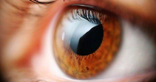 تحسين الرؤية – 6 وصايا تساعدك على تحسين الرؤية بشكل طبيعي