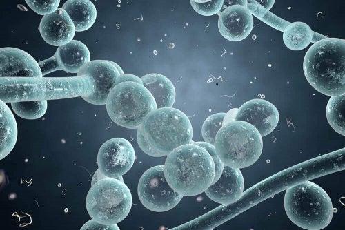 التهاب المهبل الفطري