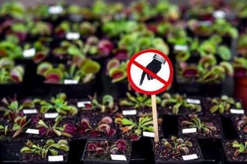 7 نباتات خطيرة يجب عليك عدم الاحتفاظ بها في المنزل