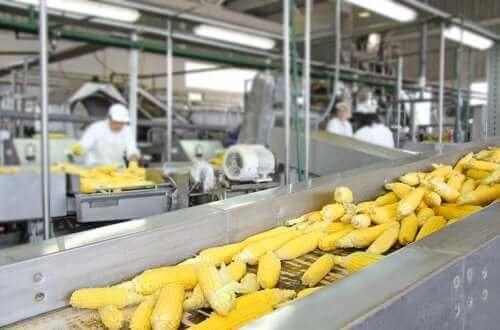 تأثير معالجة الطعام على القيمة الغذائية للأطعمة