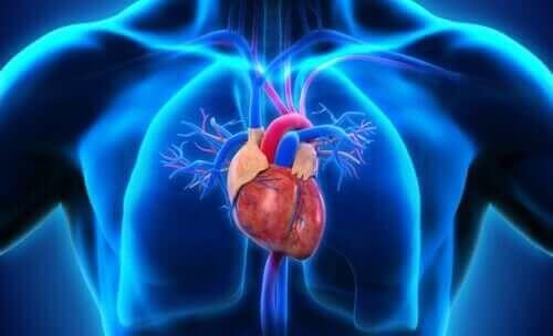أجزاء القلب المختلفة