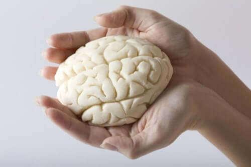 تقسيم فصوص الدماغ