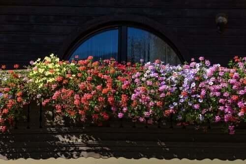 خمس أزهار عطرية للحدائق الصغيرة