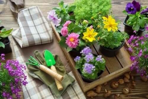 إعادة زراعة النباتات