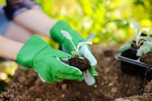 أشياء يجب أن تضعها في اعتبارك عند إعادة زرع النباتات
