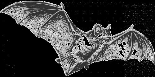 الخفافيش هي السبب وراء فيروس كورونا المستجد