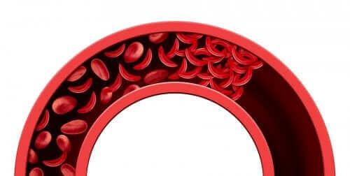 تحسين الدورة الدموية بمكونات طبيعية بالكامل
