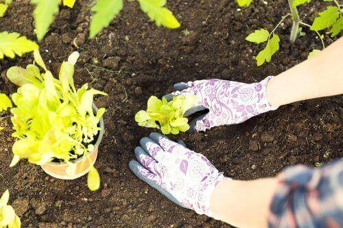 شخص يعيد زراعة نبتة