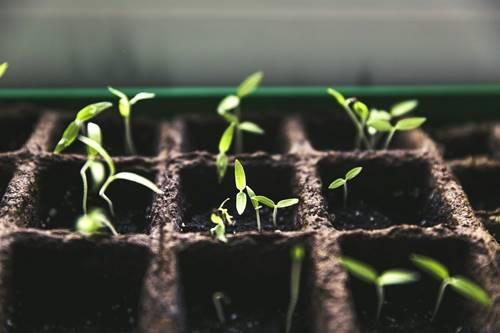 إنشاء حديقة خضروات في المنزل خلال فترة العزل المنزلي وآثاره النفسية