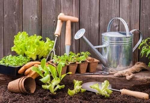 كيفية زراعة بستان حضري في مساحة صغيرة