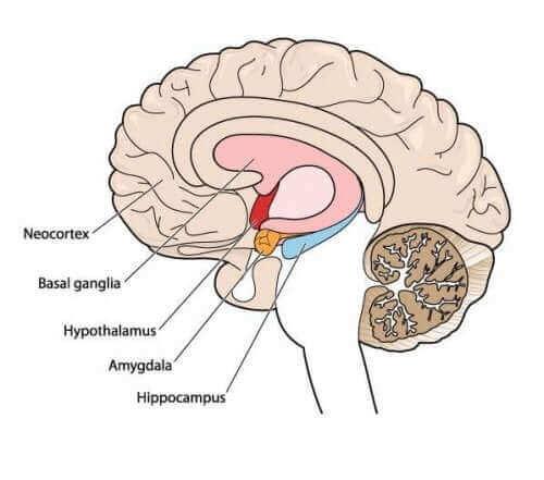 أمراض الكنع الخلقية - اكتشف معنا المزيد عن هذا الاضطراب الحركي