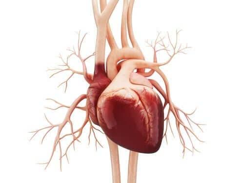 الرفرفة الأذينية – اكتشف معنا أعراض ومسببات هذا الاضطراب القلبي