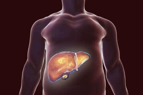 صحة المرارة - نصائح غذائية تساعدك على الحفاظ عليها وتجنب تشكل الحصوات