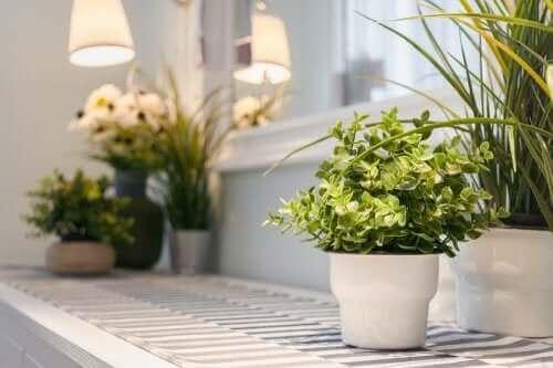 منزل دافئ بالنباتات