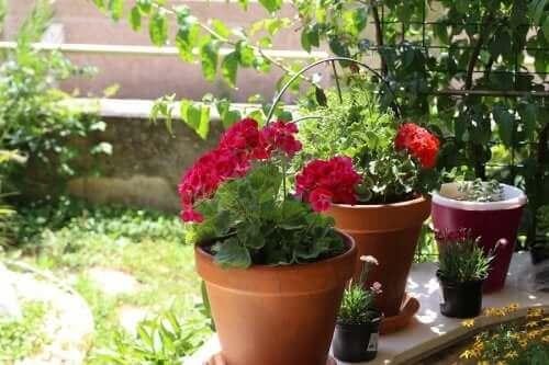 الأزهار الصيفية: ستة خيارات لحديقتك