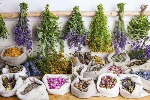 التداوي بالأعشاب – ما هي فوائد العلاج بالنباتات؟