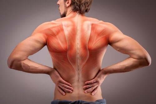 تشريح عضلات الظهر